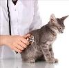 Ветеринарные клиники в Ровном